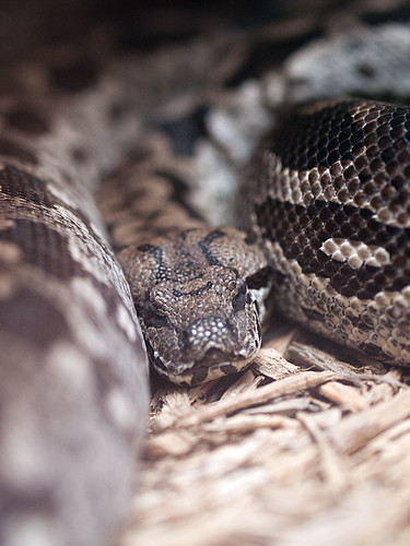 Greenville Zoo 05-24-2011 - Snake 2 | by David441491
