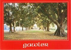 Gawler postcards (2)