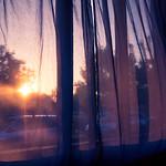 Gazing throug the curtains