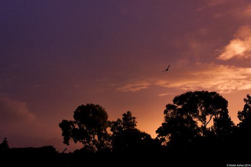 sunset silhouette canon sunsets australia southaustralia gawler canonphotography sunsetphotography canoneos450d sunsetaday violetashessunset corpril violetashessunsettumblrcompost87384725869sunset151