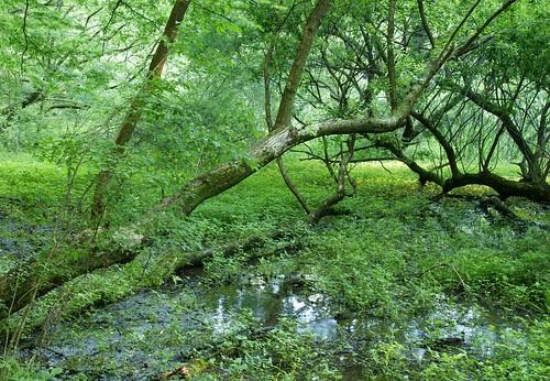 park japan japanese scenery saitama hatcho 田舎 yoshimi 埼玉県 日本の景色 吉見町 埼玉県の景色 八丁公園