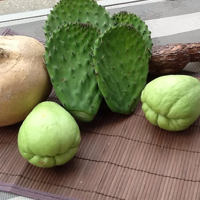Exotic food for lunch today: nopal cactus, yuca, jicama an