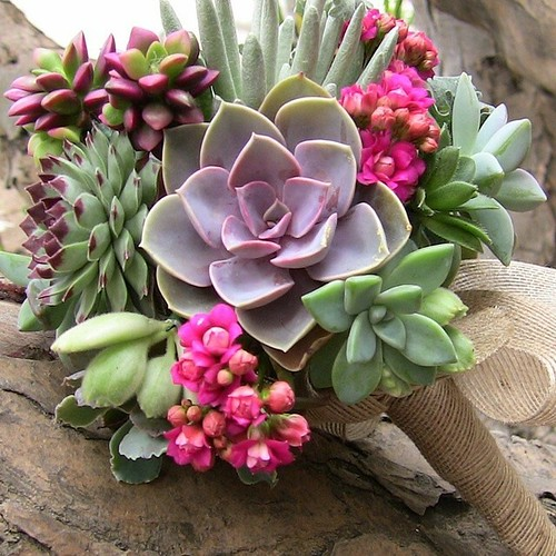 Been doing some #wedding #flowers research and I have to say I love the idea of a #succulent #bouquet! | by Queenie & the Dew