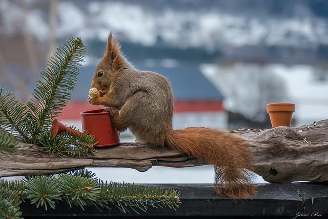 Today's breakfast guest