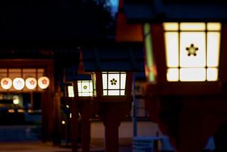 平野神社の春の夜 / Hirano-jinjya Shrine