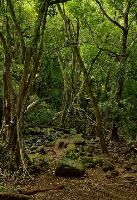 Nuuanu Pali Judd Hiking Trail, Hawaii