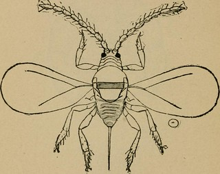 "Image from page 111 of ""Insects and insecticides : A practical manual concerning noxious insects and the methods of preventing their injuries"" (1904) 