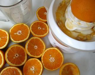 DeSantis Late Season Oranges   by robertlambertbrand