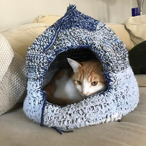 Jeff wishes everyone a happy #Caturday from his new cat cave! #jeffreylebowski #catstagram #catsofworld #catsandyarn #catsofinstagram #catcave #cathouse #catyurt #catyurtsofinstagram | by Madge Face