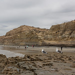Flat rock, Torrey Pines State Natural Reserve