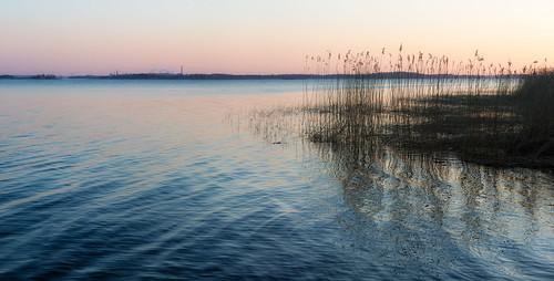 sunset reed spring sweden sverige norrköping vår solnedgång vass bråviken östergötlandslän canoneos5dmarkiii canonef70200mmf28lisiiusm