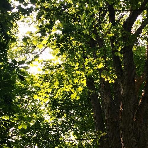 Sunbeams and leaves #instawalkhfx | by wdrwilson