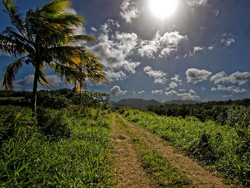 chemin arbre nuage montagne soleil paysage champ petitbourg guadeloupe glp