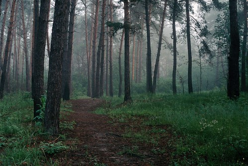 Утренний лес / Morning forest | by spoilt.exile