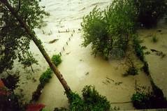 Les jardins inondés 2