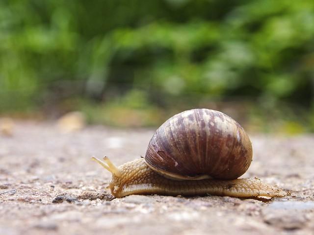 2014-04-18 um 14-29-07 - Snail Bokeh