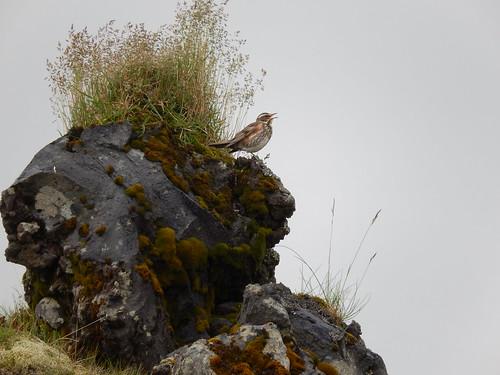 IJsland - Snaefellsnes - Hellnar - 3