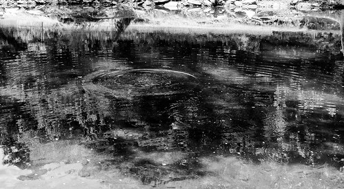 blackandwhite water stream splash odc iphone5