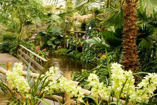 Luttelgeest - Orchideeën Hoeve