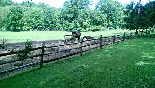 horses -edit