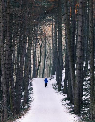 woods bosque nature snow winter walk hiking solitude soledad