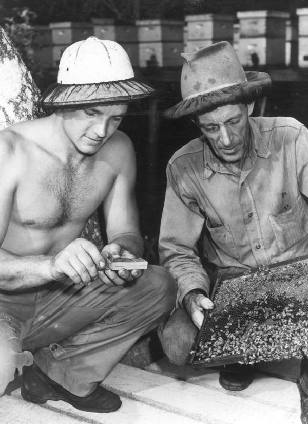 Wallace Anderson puts queen bee in container while R.R. Talbert holds the comb - Apalachicola