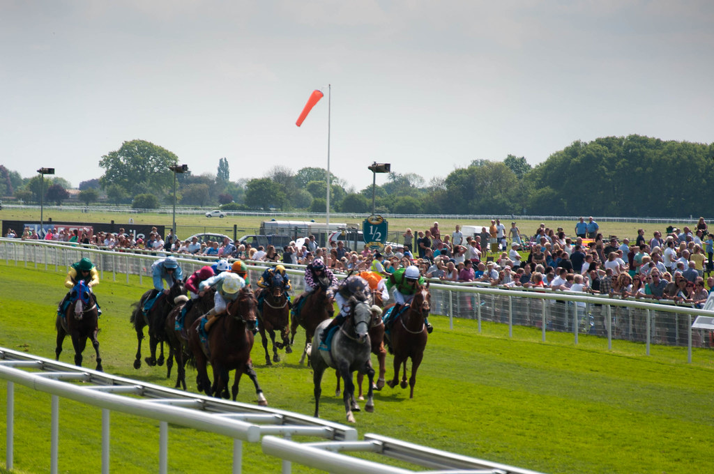 York Races Dante 2014-45