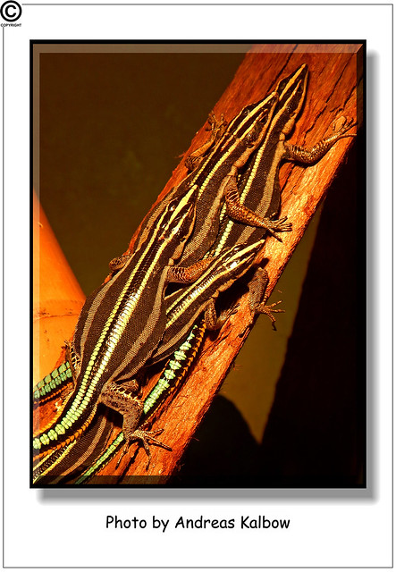 Scales Reptiles 04-2014 (11)