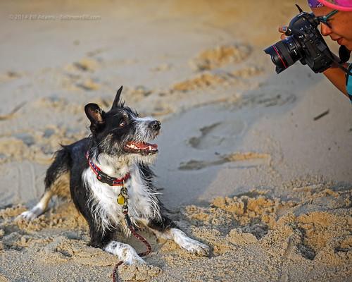 ocean camera dog beach forest sunrise maryland bordercollie oceancity atlanticocean bordercolliemix nikkibass
