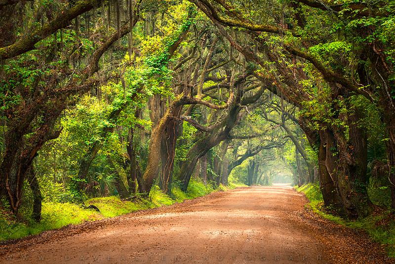 Edisto Island South Carolina Dirt Road Landscape Charlesto Flickr