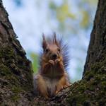 Hazelnut found