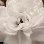 White delicate