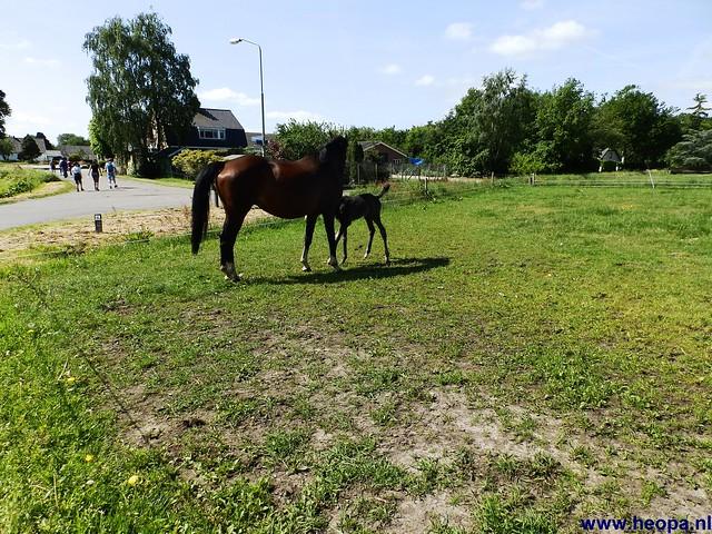 17-05-2014 Nijkerk 43Km (77)