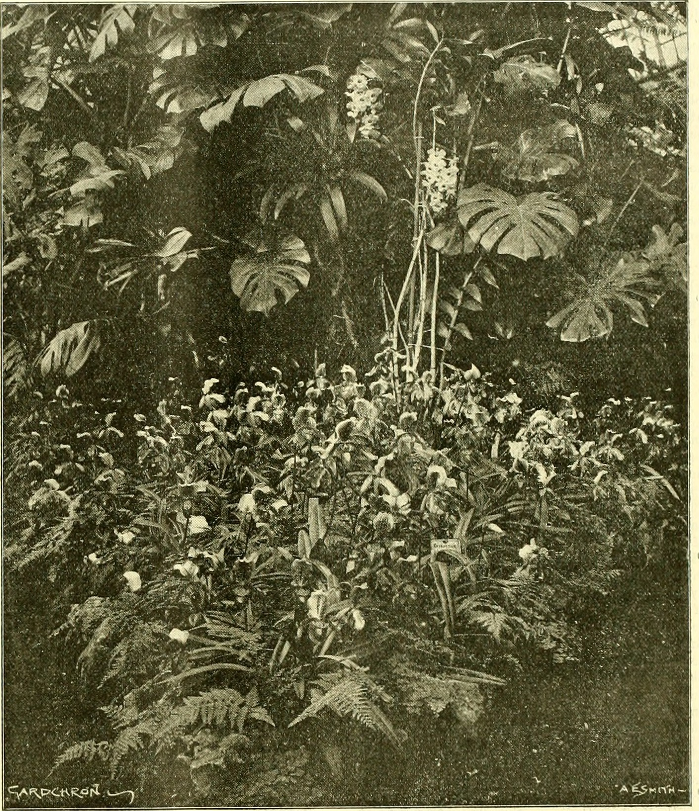 Image from page 114 of