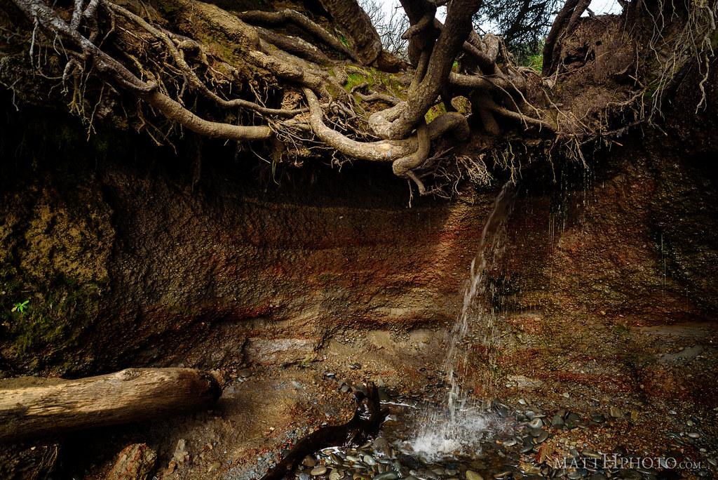 Kalaloch Tree Cave
