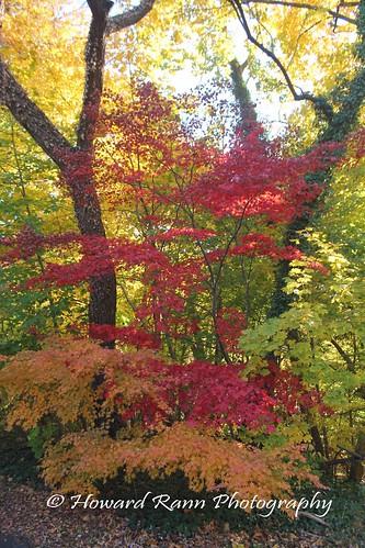 fairmount park japanese tea house philadelphia pennsylvania united states america