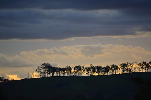 trees sunset skyline clouds landscape countryside sundown horizon australia ridge queensland cloudscape sequeensland loganvalley allancreek