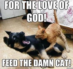 For The Love Of God! ~ Feed The Damn Cat...!