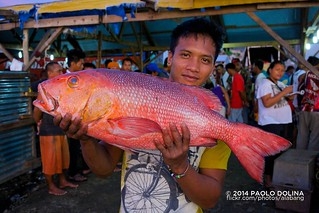Two-spot red snapper (Lutjanus bohar) | by Paolo Dolina