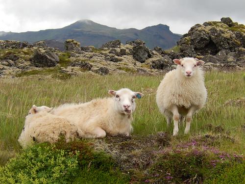 IJsland - Snaefellsnes - Berserkjahraun - 2