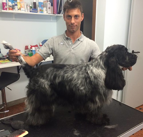 Rufus | by wellnessdog