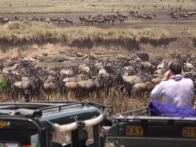 Looking back.....Kenya 2010  Wildebeest migration
