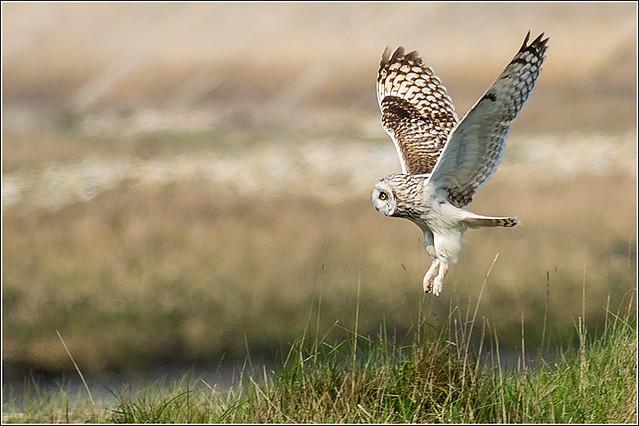 SEO Flight Pics-3