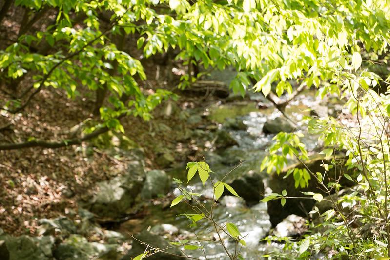 鳴神山の新緑