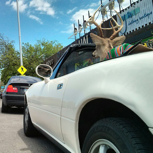 deer in the driver seat