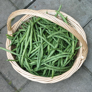 DP2M3027 Green Beans from the Dacha Garden | by carlfbagge