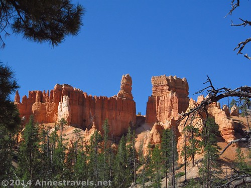 Hoodoos along the Queen's Garden Trail in Bryce Canyon National Park, Utah
