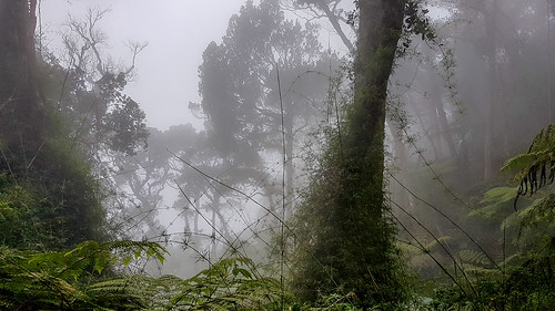 ascent base camp climb climbing clouds forest jungle kinabalu kota lodge malaysia mist mountain peak rainforest sabah sunrise sunset ranau my