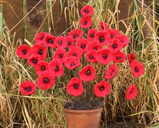 angela barrow poppies | by Angela Barrow