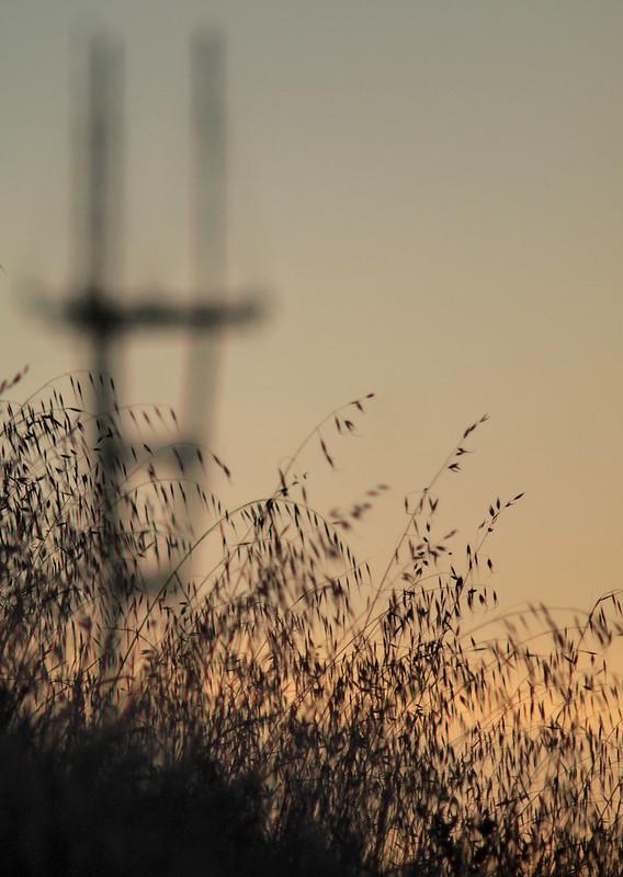 sutro_grass